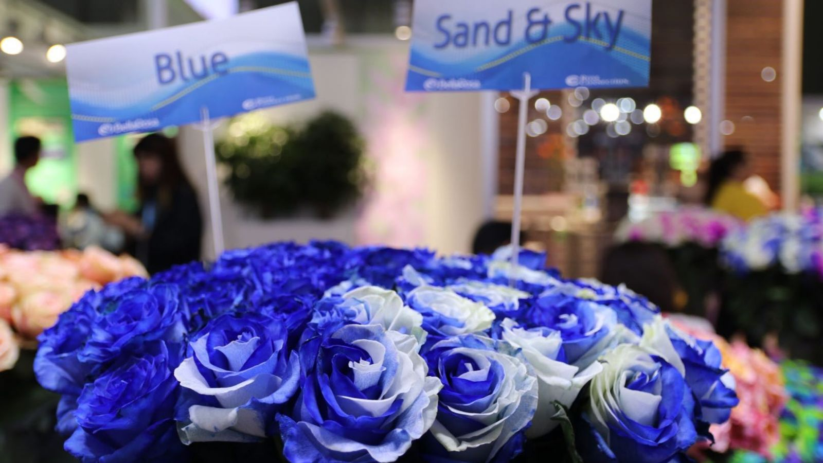 Blue and Sand & Sky roses