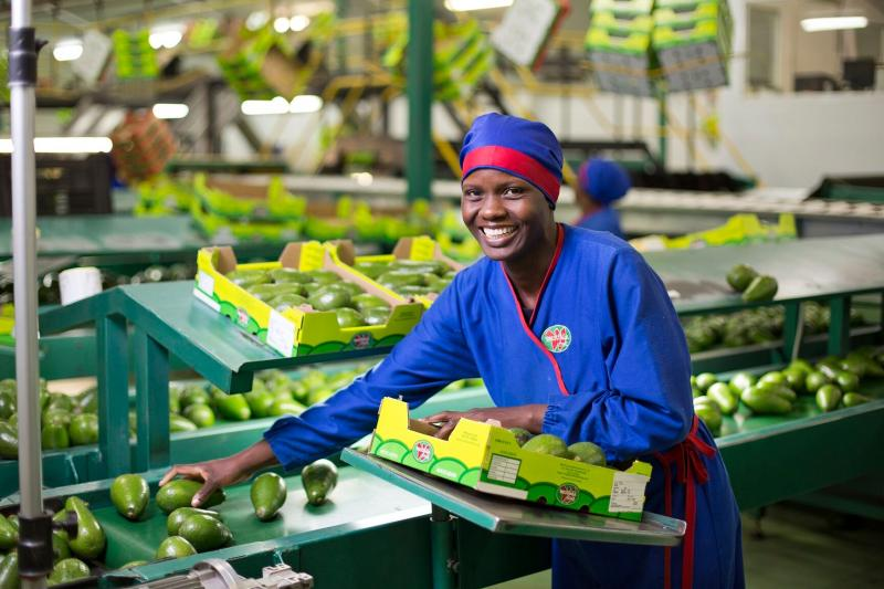 Here Are Five African Countries That May Someday Supply Avocados to