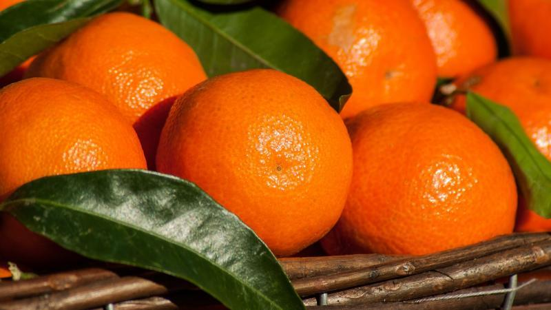 First Container of Pakistani Kinnow Mandarins Arrives at Dalian Port   Produce Report