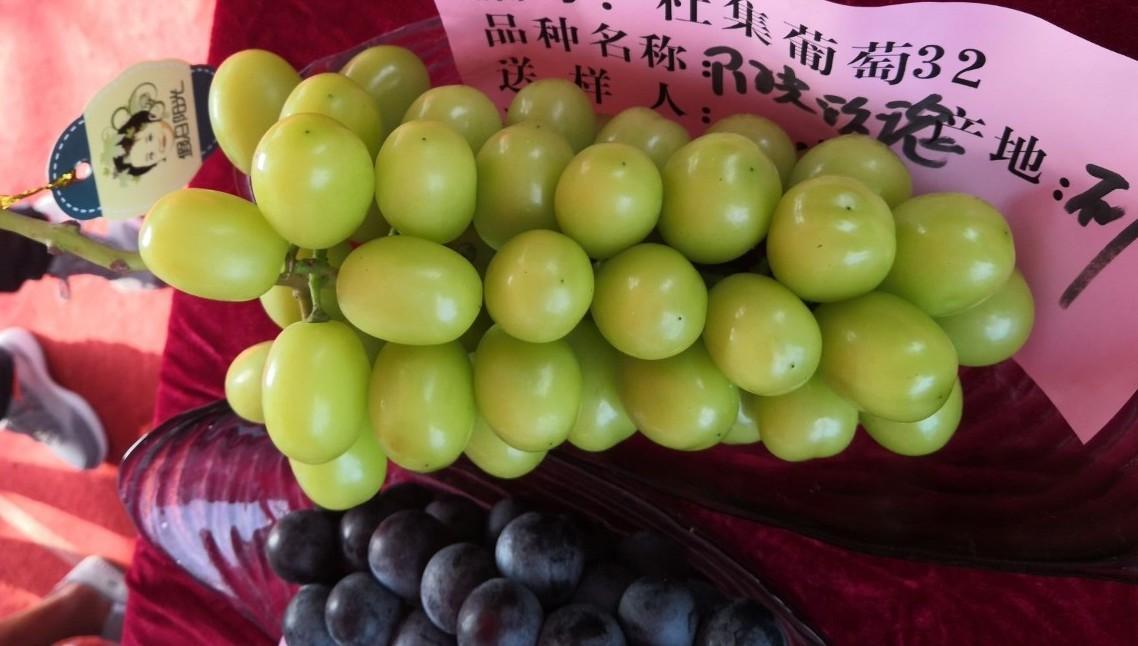 A Look at Shine Muscat, China's Hot New Table Grape Variety | China